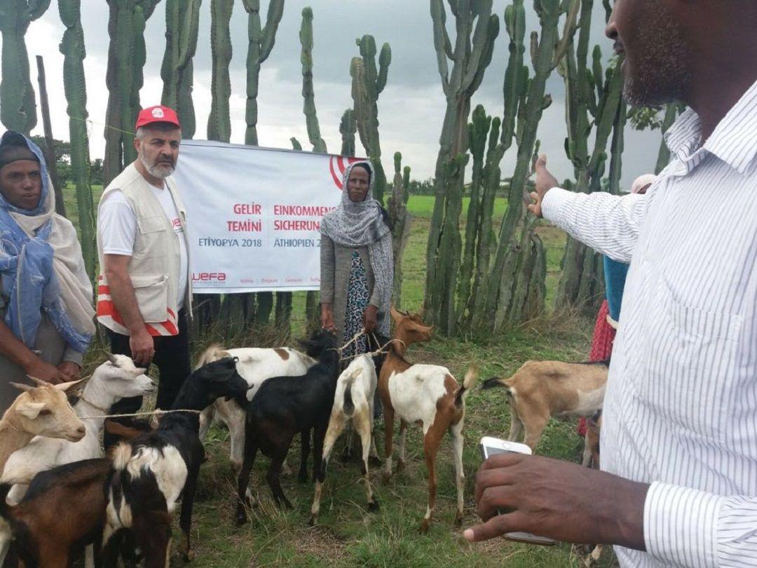 Tanzanya ve Etiyopya'daki 60 aile 2018 yılında WEFA ile iş sahibi oldu